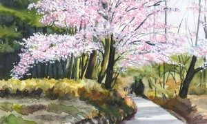 575. Cherry Blossoms by the Shrine watercolor by Mariko Irie