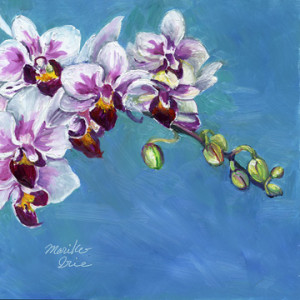 pinkorchid2